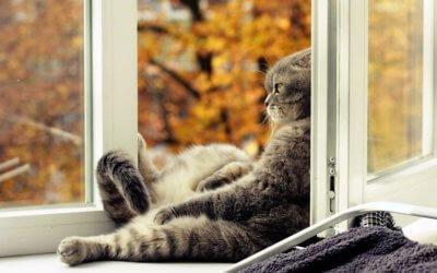 Осенняя хандра. Как с ней бороться?