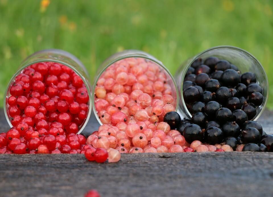 режим питания летом-ягоды